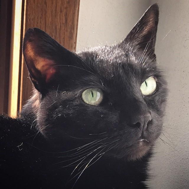 Mr. Spooky's senior portrait.